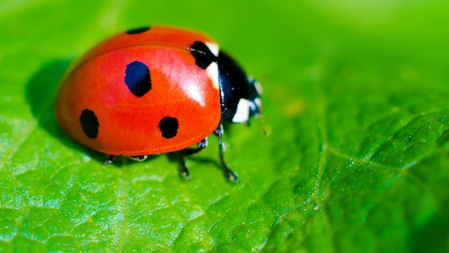 LITTLE POEM: Ladybug